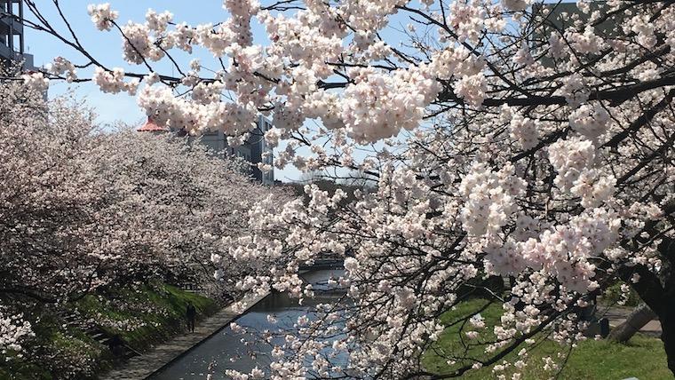 20190405松川べり桜_アイキャッチ